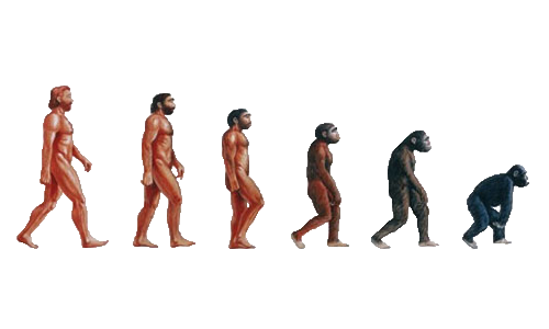 A pictorial depiction of the ascent of monkey, a parody of the classic image, The Ascent Of Man