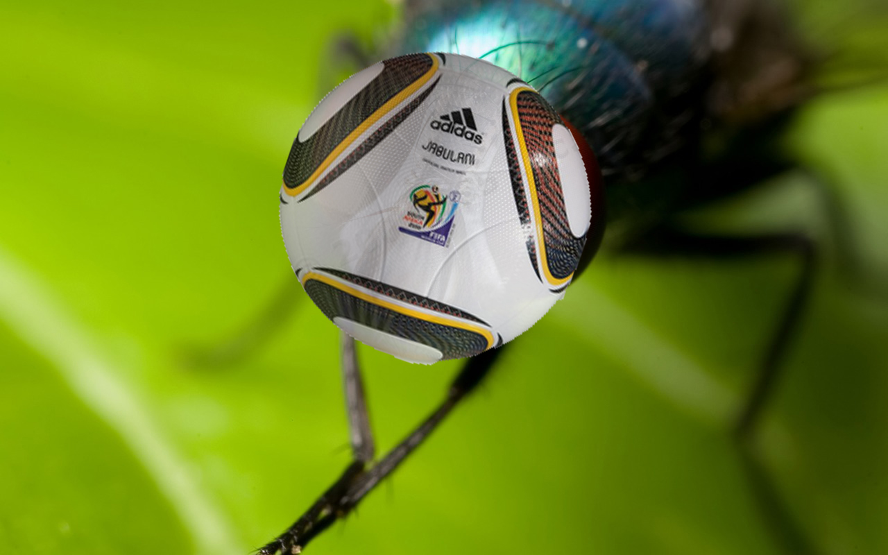 The South Africa Football (soccer) World Cup 2010 ball, the Jabulani, as the head of a fly.  A fly's head.  Flies.