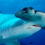7 Reasons It Must Be Tough Being A Shark