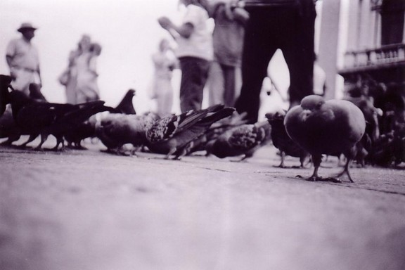 A black and white lomograph of pigeons eating in Venice
