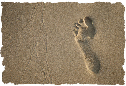 Guest Post: 7 Reasons To Reduce Your Carbon Footprint