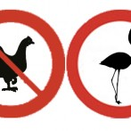 7 Reasons to Replace Chickens With Flamingos